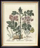 Besler Floral V Posters by Besler Basilius