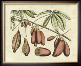 Botanical III Prints by  Van Rheet