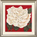 Rosa Blanca Grande I Prints by Judy Shelby