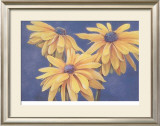 Rudbeckias Prints by M. De Flaviis