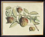 Botanical IV Posters by  Van Rheet