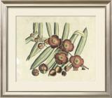 Botanical I Posters by  Van Rheet
