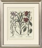 Besler Floral III Prints by Besler Basilius