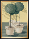 Buxus Prints by Franz Heigl