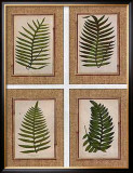 Bamboo and Ferns Poster by Liu Chang