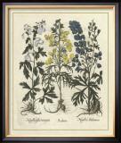 Besler Floral I Print by Besler Basilius