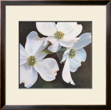 Dogwood Study Poster by Ginny Chenet