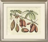 Botanical III Posters by  Van Rheet