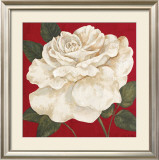Rosa Blanca Grande II Poster by Judy Shelby