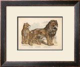 Animaux d'Afrique, Lion Posters