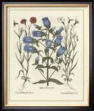 Besler Floral IV Framed Giclee Print by Besler Basilius