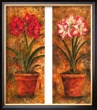 Amaryllis Petites Print by Judy Shelby