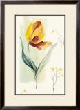 Tulip Poster by Paul Hargittai