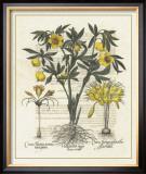 Besler Floral II Prints by Besler Basilius