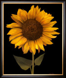 Sunflower I Prints by Tan Chun