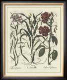 Besler Floral III Posters by Besler Basilius