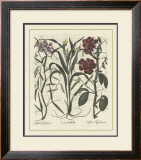 Besler Floral III Poster by Besler Basilius