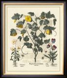Besler Floral VI Art by Besler Basilius