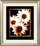 Beautiful Flower IV Prints by Gerard Van Hal