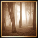 Woods Study II Print by Alan Klug