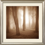 Woods Study II Prints by Alan Klug