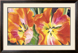 Two Parrot Tulips Posters by Leslie Gerstman