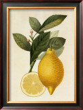 Tuscany Citrus I Prints