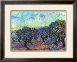 The Olive Grove, c.1889 Poster by Vincent van Gogh