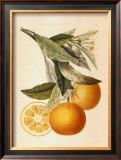 Tuscany Citrus II Print