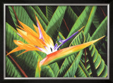 Bird of Paradise Posters by Glenn Cernosek
