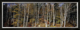 Birch Grove, Nova Scotia Prints by Axel M. Mosler