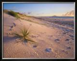Northland Karikari Bay Prints by  Popp-Hackner