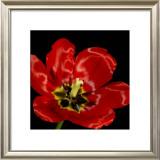 Shimmering Tulips III Prints by Renee Stramel