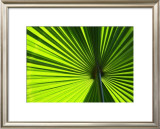 Leaf I Prints by Ortwin Klipp