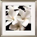 Plumeria View Limited Edition Framed Print by  Peterson