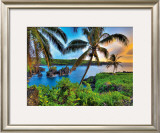 Where Da Coconuts Grow Framed Giclee Print by Randy Jay Braun