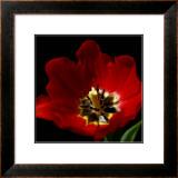 Shimmering Tulips II Prints by Renee Stramel
