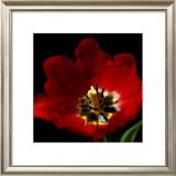 Shimmering Tulips II Poster by Renee Stramel