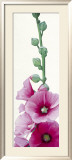 Pink Hollyhock II Prints by Stephanie Andrew