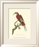 Crimson Birds IV Print by Frederick P. Nodder