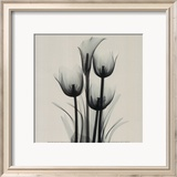 Tulips and Arum Lily Affiches par Marianne Haas