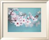 Plum Blossom Poster by Shana Rae