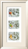 Fruit Trio I Prints by Gilles Martin-Raget