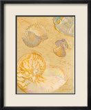 Shoreline Shells VI Affiche par Lorraine Vail