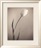 Tulip Poster by Laurie Eastwood