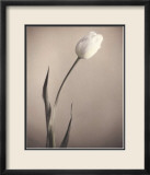 Tulip Prints by Laurie Eastwood