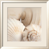 Shells II Prints by Jan Lens