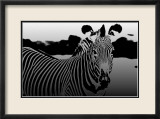 Zebra Chrome II Art by Susann & Frank Parker