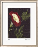 Poppy Limited Edition Framed Print by Jm Designs
