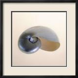 Polished Nautilus Kunst von Tom Artin